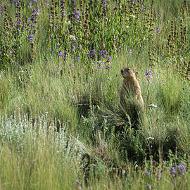 Prairie Dog in Flowers by Mary Lee Dereske