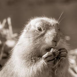 Prairie Dog Mealtime by Kathi Isserman