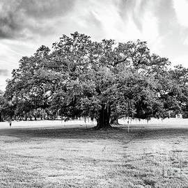 Prairieville Oak - BW by Scott Pellegrin
