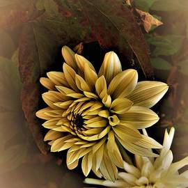 Pretty Carnations by Shelly Wiseberg