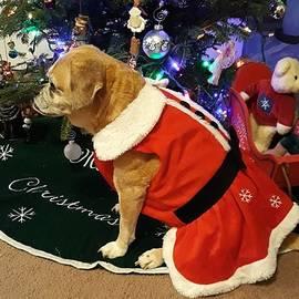 Pretty Christmas Luna by Jennifer Kingston