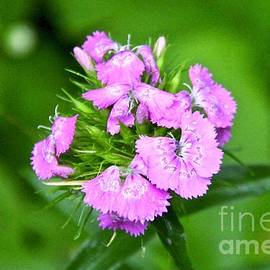 Pretty in Lilac by Ann Brown