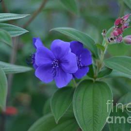 Pretty in Purple by Miriam Danar