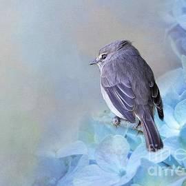 Pretty Little Bird by Eva Lechner