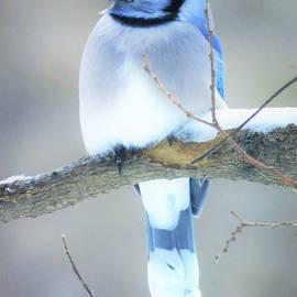 Pretty Mister Blue  by Lori Frisch