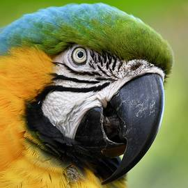 Pretty Parrot Closeup by Richard Bryce and Family