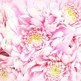 Pretty Pink Blossoms by Dora Sofia Caputo
