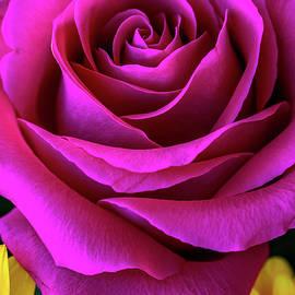 Pretty Rosey by Az Jackson
