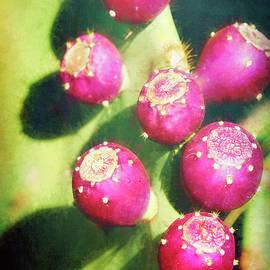 Prickly Pear Fruit Abstract  by Saija Lehtonen