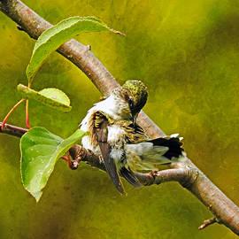 Primping Hummingbird by Carmen Macuga