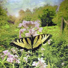 Sweet William Wildflowers And The Butterfly                             by Patricia Keller
