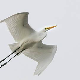 Profile of Flight by Ray Silva
