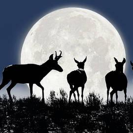 Pronghorn Antelope Wildlife Midnight Moon by Jennie Marie Schell