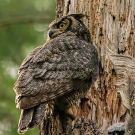 Protector - Owl Art by Jordan Blackstone