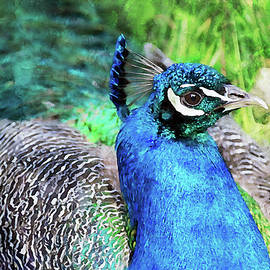 Proud as a Peacock by Peggy Collins
