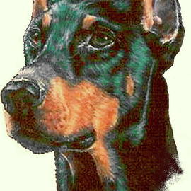 Proud Doberman in Colored Pencil by Barbara Keith