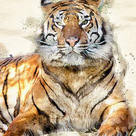 Proud Tiger by Darren Wilkes