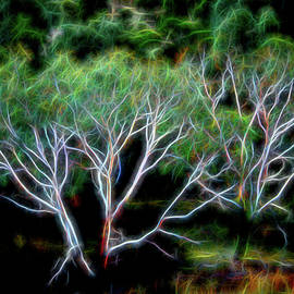 Psycho Trees by Jerry Griffin