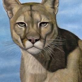 Puma - the beautiful cat by Vishvesh Tadsare