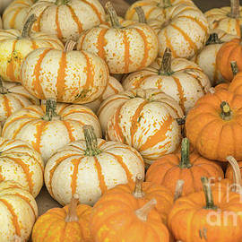 Pumpkin time 2 by Claudia M Photography