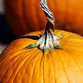 Pumpkin Twisty Stem
