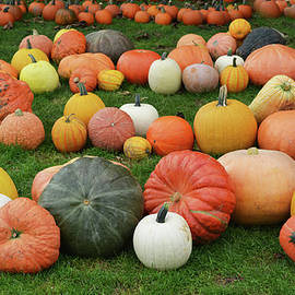 Pumpkin Variety by Aimee L Maher ALM GALLERY