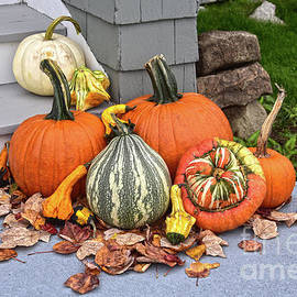 Pumpkins and Gourds by Catherine Sherman