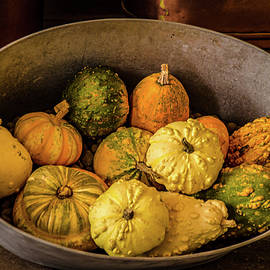 Pumpkins and Gourds by Julie Palencia