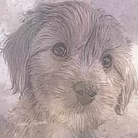 Pup Scarlett by Mariecor Agravante