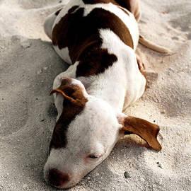 Puppy Break by Montez Kerr