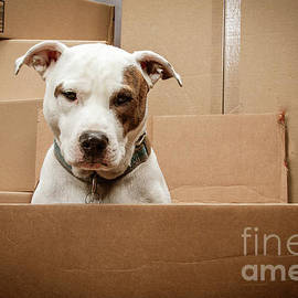 Puppy Dog Shipping by Cindy Shebley