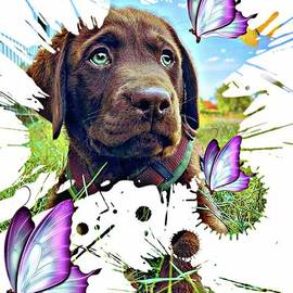 Puppy labrador by Laurence Stefani
