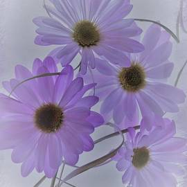 Delicate Purple Daisy Blossoms  by Suzanne Wilkinson