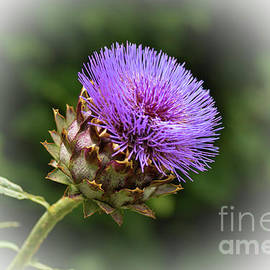 Purple Artichoke by Catherine Sullivan