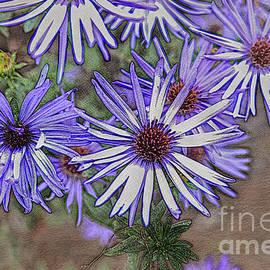Purple Asters by Bentley Davis