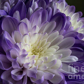Purple Blossom by Linda Howes