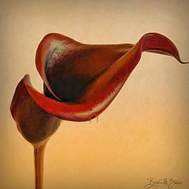 Purple Calla Lily  by Barbara Zahno