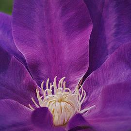 Purple Clematis Horizontal by Marilyn DeBlock