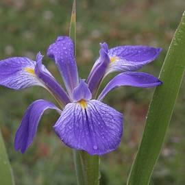 Purple Elegance by Nieves Egelkraut