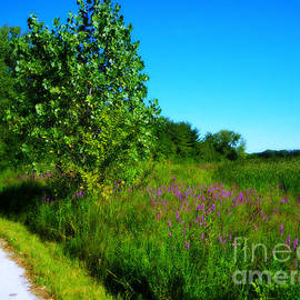 Purple Flowers by the Trail by Frank J Casella