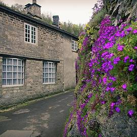Purple Flowers In Buxton by Watto Photos