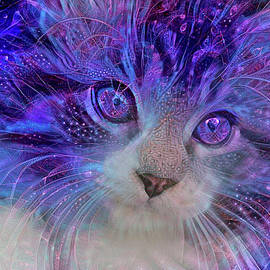 Electric Blue Maine Coon Kitten