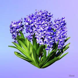 Purple Hyacinths by Susan Savad