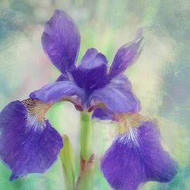 Purple Iris by Terry Davis