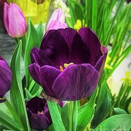 Purple Majestic Tulip by Luther Fine Art