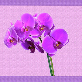 Purple Orchid by Constance Lowery