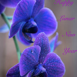 Purple Orchids for Lunar New Year by Tran Boelsterli