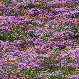 Purple Prairie  by Lori Frisch