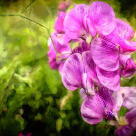 Purple Rain by Jim Love