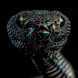 Purple spot viper by Don Champlin